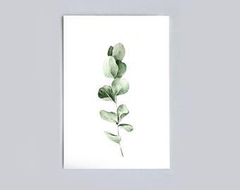 Postcard A6 - Eucalyptus - Unique Design - SFA
