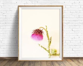 "photography, botanical, instant download art printable art, photography, instant download art, modern, wall art, art -""The Sheepish Thistle"""