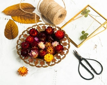 Dried strawflowers etsy for Dried flowers craft supplies