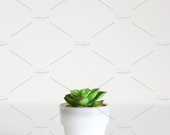 Styled Stock Photo | Little Succulent | Blog stock photo, stock image, stock photography, blog photography