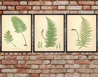 Fern Print Set of 3 - Sale Discount - Fern Poster - Vintage Botanical Illustration Home Decor Book Plate #vi518