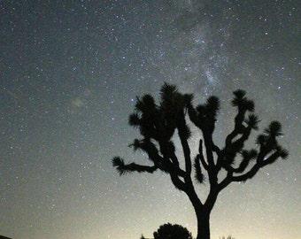 Joshua Tree / Joshua Tree Print / Joshua Tree Photography - Nature Photography - Night Photography - California Art / California Wall Art