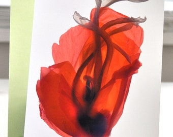 Mothers Day Card Floral Note Card Red Poppy Free Shipping in US