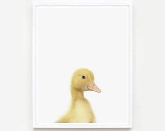 Baby Animal Nursery Art Print. Duckling Little Darling. Animal Wall Art. Animal Nursery Decor. Baby Animal Photo.
