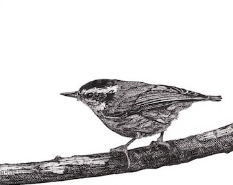 Wren Print from Original Pen and Ink Drawing