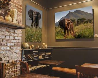 "Elephant Photo Print - ""King"" - African Wildlife - Animal Lovers Gifts - Wild Animals - Nature Print - Elephant Art - Wall Art - Fine Art"