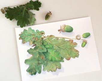 Botanical print oak leaves & acorns A5, 8x10, A4; autumn watercolor print; woodland home decor; nature gift; green tree branch wall art