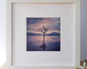 Framed Photographic Print of The Lonely Tree at Milarrochy Bay - Loch Lomond