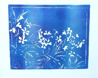 Vinca - Bright Blue w White Streaks