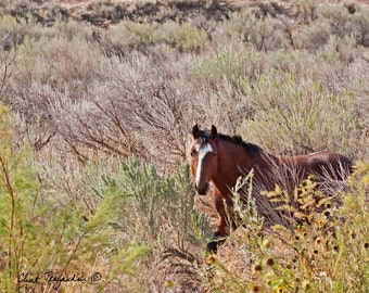 Wild horse, Jesse James, Original Fine Art Photography