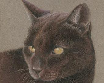 Gift Certificate, Custom Pet Portrait, Pastel Pet Portraits, Original, Hand Drawn from your Photo