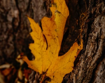 Autumn, Nature Photography, Fine Art Print, Home Decor, Landscape Photography, Oklahoma Photography