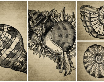 Vintage Animals Sea Shell Digital Canvas Collage Sheet Download Fabric Illustration Picture Art