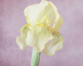Yellow Iris Fine Art Photography Shabby Chic Pale Yellow Plum Lavender Purple Green Pink Spring Flower Home Decor Wall Art Bedroom Decor