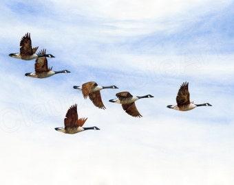 Giclée, watercolor, watercolor, goose, goose
