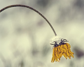 Flower Photo, Lonely Flower Image, Nature Image, Nature Photography,