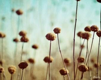 field, flowers, nature, blue, brown, fine art photography