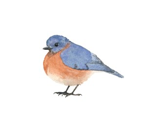 Bluebird - Blue and Orange Bird Watercolor - Fine Art Print