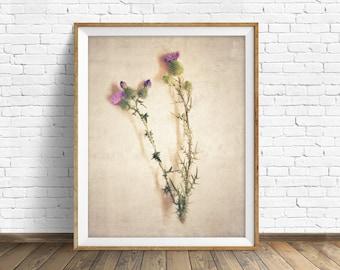 "botanical art, thistles, nature photography, instant download printable art, wall art, wall art prints, printable art, art -""Specimen No. 2"""