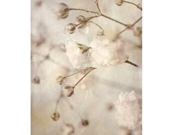 Macro Flower Photograph, Baby's Breath Art, Neutral Decor, Sepia Print,  White Flower Photography,  Floral Art Print,  Floral Wall Decor