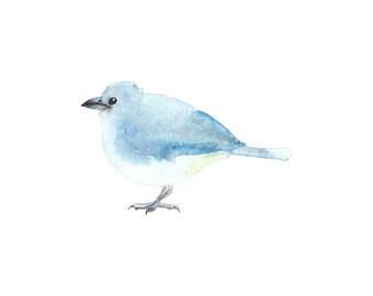 Light Blue Bird - Fine Art Print
