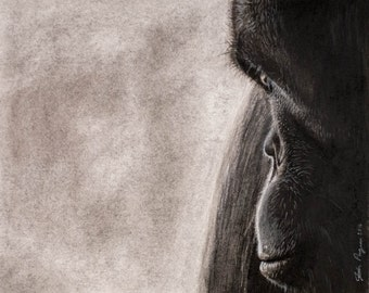 Giclee print of my original charcoal drawing Chimp