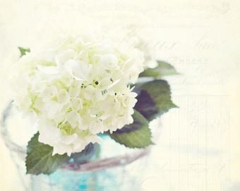 Flower Photography - Flower Photo - Nature Photo - Flower - White Hydrangea Photograph - Fine Art Photography Print - White Home Decor