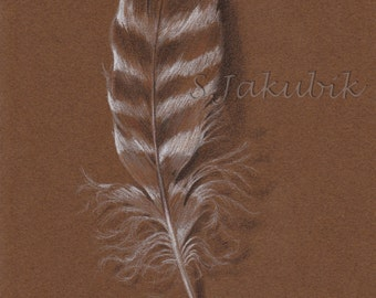 Feather Drawing, Original Drawing, Feather Illustration