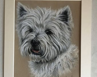West Highland White Terrier Original Pastel Painting