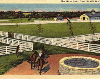 Blue Grass Stock Farm, Horses, Kentucky - Vintage Postcard - Postcard - Unused (RR)