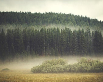 Nature Photography Print - Landscape Photography - Fog Photograph - Green Photograph - Home Decor - Forest Photography - Lake Tahoe Wall Art