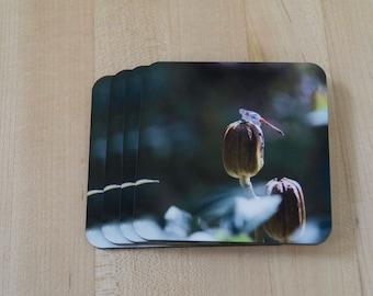 Set of 4, Dragonfly Photo Coaster, Cork Bottom