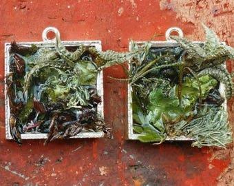 Succulent and Fern Garden Pendent