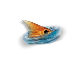 Tailing Redfish Decal, Tailing Redfish Sticker, Tailing Redfish, Redfish