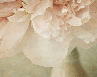 Pink Peony Photograph, Peony Still Life, Floral Art Print, Flower Wall Decor. Peony Wall Art, Peony Print