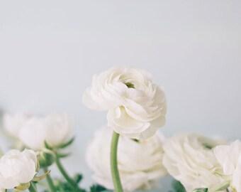 Modern Fine Art - White Ranunculus Home Decor Floral Flowers Photo Feminine Romantic Pretty Print Modern Simple Chic Photography Nature