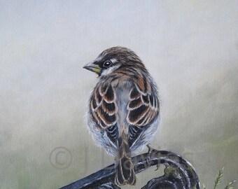 Sparrow Print, Sparrow Painting, Sparrow Art Print, Garden Sparrow, Bird Print, garden bird print, sparrow artwork