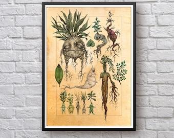 Harry Potter Mandrake Poster, Mandragora, Mandrake, Harry Potter Movie Wall Art, Harry Potter Poster, Harry Potter Print, Mandrake Plant