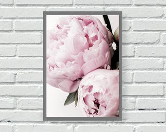 Pink peonies wall print, flower, floral, dusky pink, blush pink, kitchen, living room, home, wall decor, home decor, close up, peony