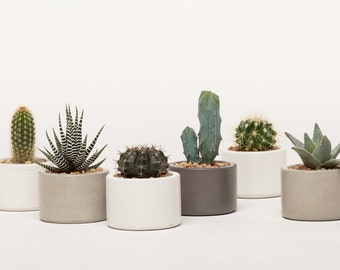 Concrete Planter, Mini Planter, Concrete Mini Planter, Succulent Planter, Cactus Planter, Catch All, 1 ea. Choose from 3 colors