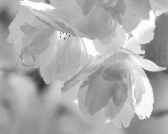 Black and White Art Photography, Dreamy, Soft Blossoms, Spring Flower,Gentle Wall Decor,Raindrops, Floral Photo Print,In the Rain,8x10,11x14