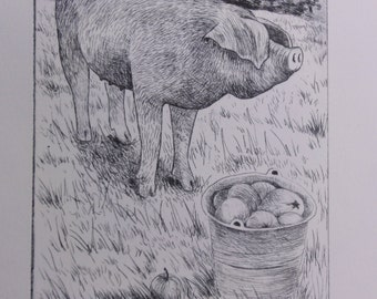 Orchard Pig. Original drypoint etching.+