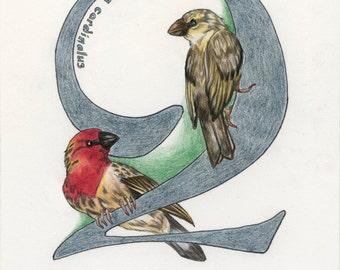 Avian Alphabet Q
