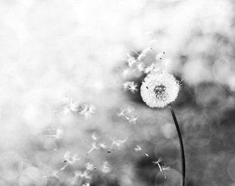 Black and white photography dandelion 8x10 8x12 fine art photography nature bokeh photography whimsical dandelion seed black white art print