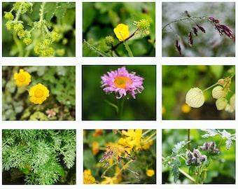Photo set - Drops, Nature, 9 Photo.