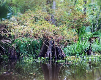 Louisiana Bayou Fine Art Nature Photograph, Landscape Print, Cypress Tree, Swamp, Home Decor, Wall Art