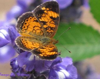 Orange Butterfly & Purple Flowers Fine Art Photograph Nature Photo Home Decor