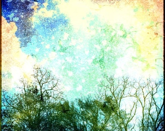 Abstract Nature Photograph, Colorful Trees and Clouds in a Sky of Blue and Orange, 8x8 Print, When the Sky Began to Scream