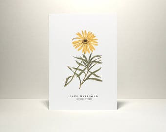 Cape Marigold: Greeting Card