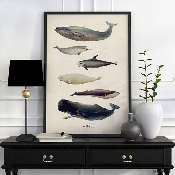 Whales A3 size poster, animal art, Wall art ,Nursery art , Giclee poster, Animal art, poster print SEA218WA3